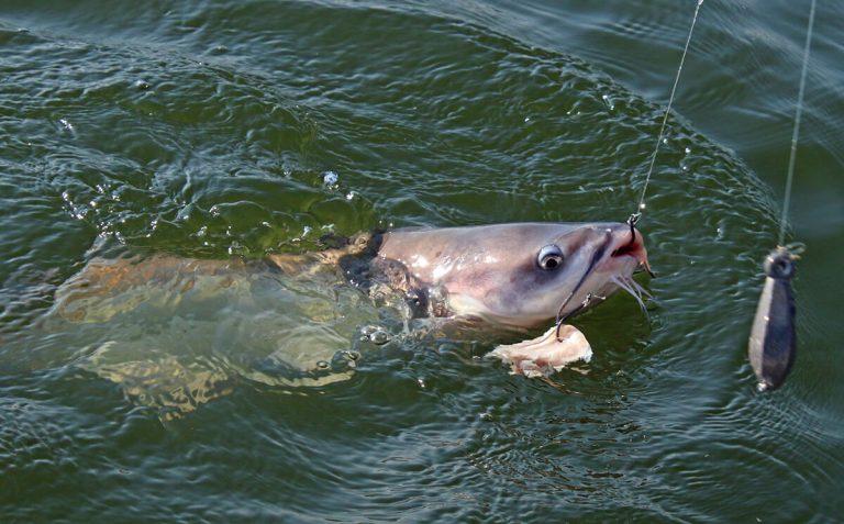 Best CatfBest Catfish Baits-Simple-Baits-for-Catfishish Baits